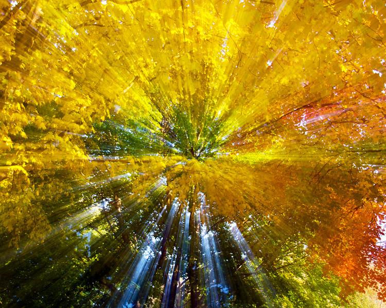 290/365- Autumn Explosion!