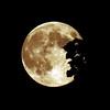 244/365-Blue Moon