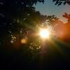 223/365-Sun Flare