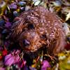 295/365-Zoe Puppy