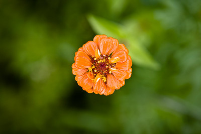 Day 42: Wildflower