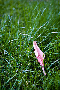 Day 5: Fallen Petal Artsy Title (7/5/2011)