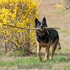 Orlee finds a little stick.