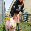 Jessica Howard tries to get her pig going the right direction after weighing in for 4-H on Sunday.<br /> <br /> Photo by Chris Rourke