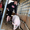 Brennan Smith chases his pig off the scale after weighing in for 4-H on Sunday.<br /> <br /> Photo by Chris Rourke