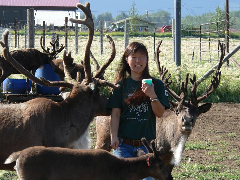 At the Reindeer Farm