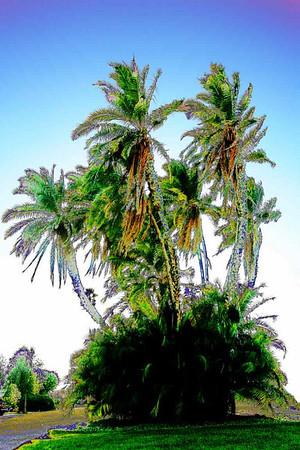 Любимое дерево. 2006