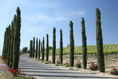 Wineyards Guards. Temecula. CA. 2006