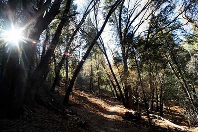 В горах Калифорнии. 2006 г.