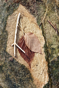 Love the shale textures and the leaves against them