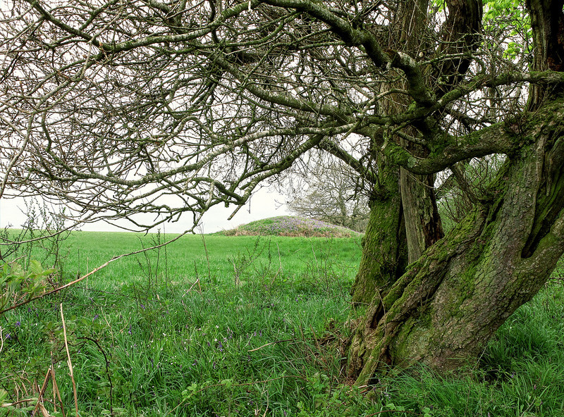A tumulus (bronze/iron age burial mound) next to the Wessex Ridgeway, probably in use as a highway at that time.