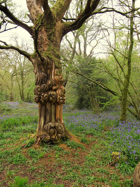 Some lovely carving on a dead tree in the woodland at Hillcombe Coppice.