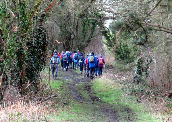 8.76 mile Ramblers walk from Abbotsbury on 7 January 2015
