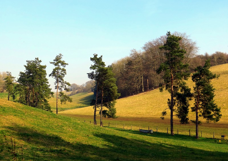 After lunch in Fontmell Wood this is the view up the Shepherd's Bottom!