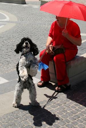 МИШКА.  Мой лучший ДРУГ по жизни ! Long Beach , June 2010.
