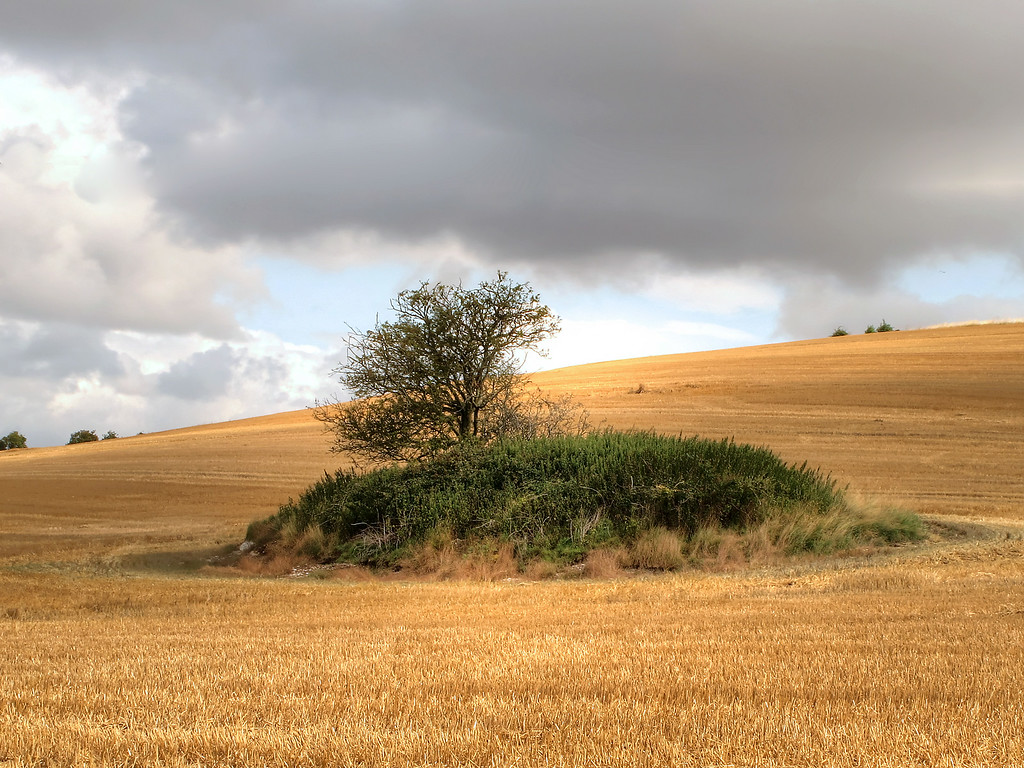 An ancient Tumulus, or bronze age burial mound, near Bere Down farm.
