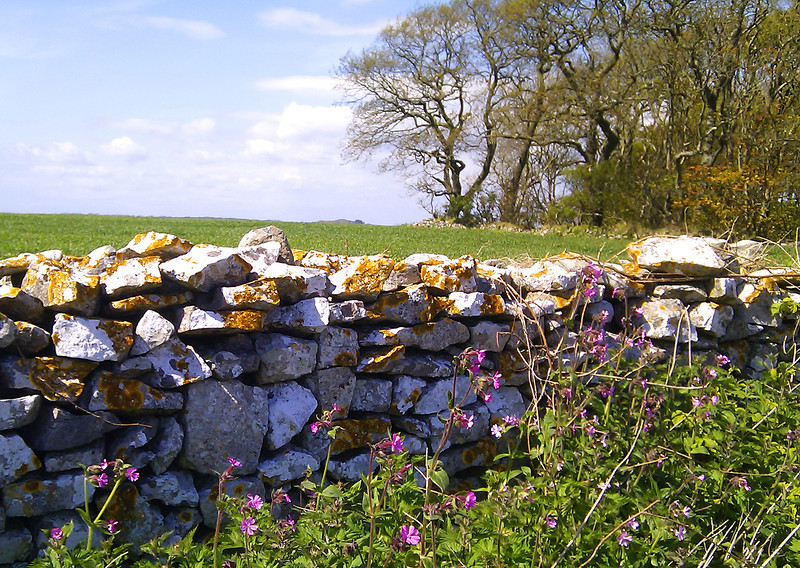A dry stone wall gives protection to wild flowers in the afternoon sun.