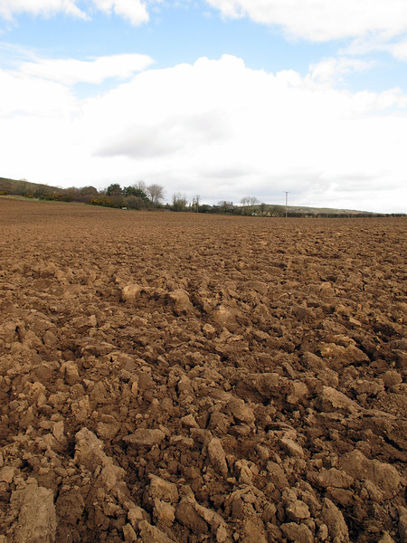 Just what all walkers enjoy, a footpath route under a freshly ploughed field.   At least it was fairly dry!