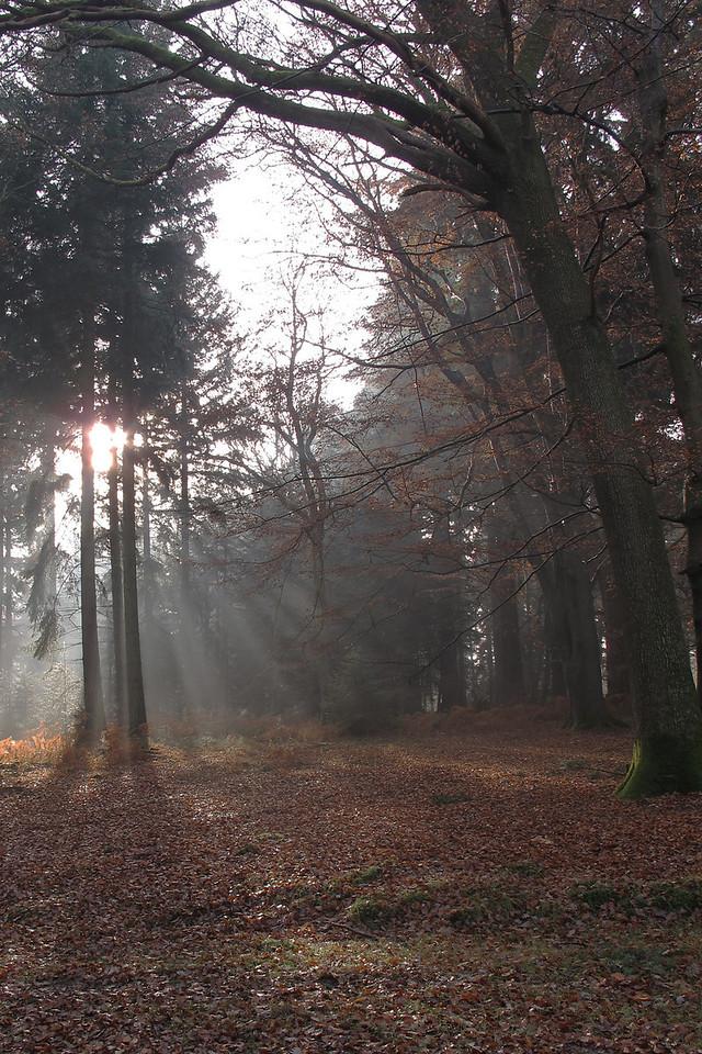 Trees near Blackwater Arboretum.