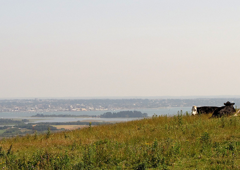 The view across Poole Harbour from Knowle Hill.