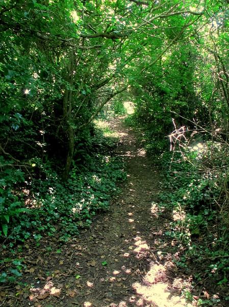A shady path down onto the farmland.