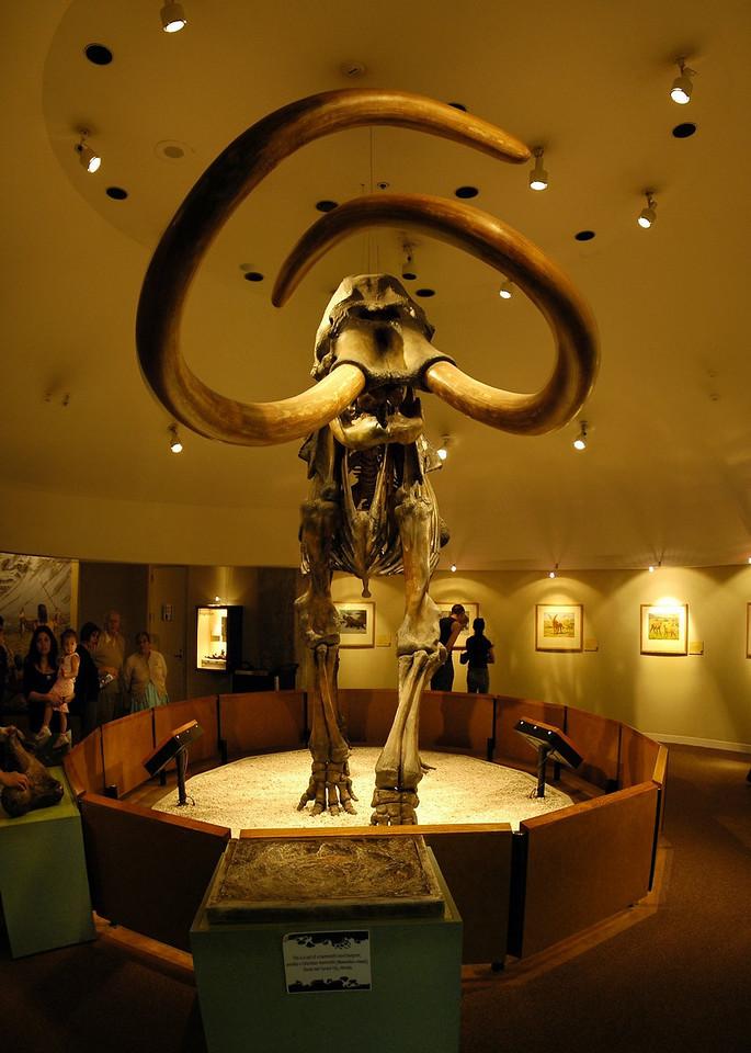 Mastodon vertical panorama, La Brea Tar Pits, Los Angeles, CA