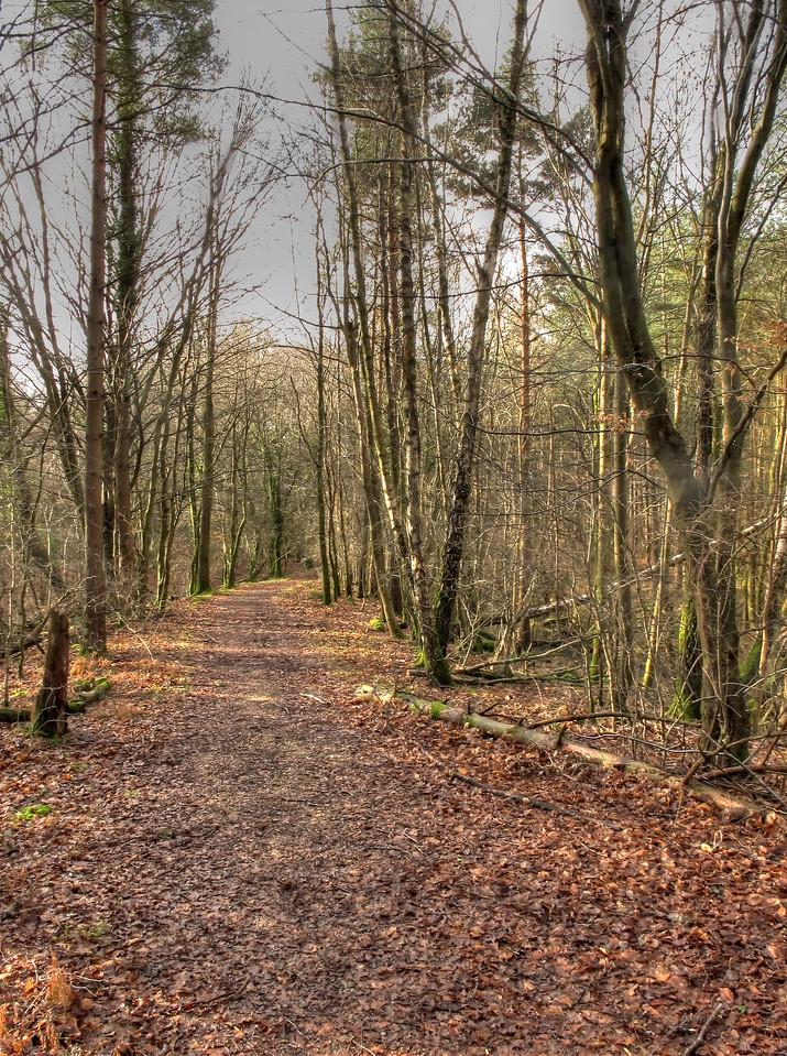 An old trackway leading from Brockenhurst Park towards Lyndhurst.....