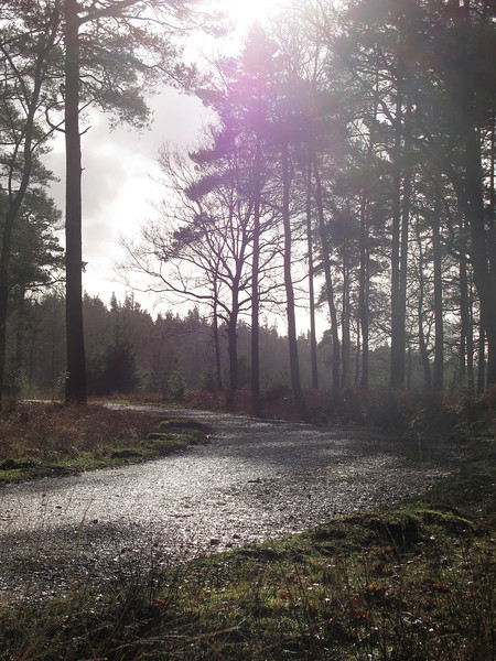 The stop for morning coffee at Park Hill Inclosure.