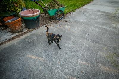 Kitty my cat