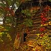 Hidden in the Woods - VA Hwy 8