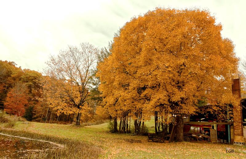 Tree at Pottery Kiln