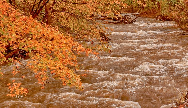 Stream near Thurmont, MD
