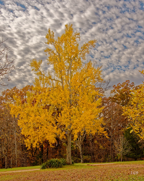 Tree, Monticello, VA