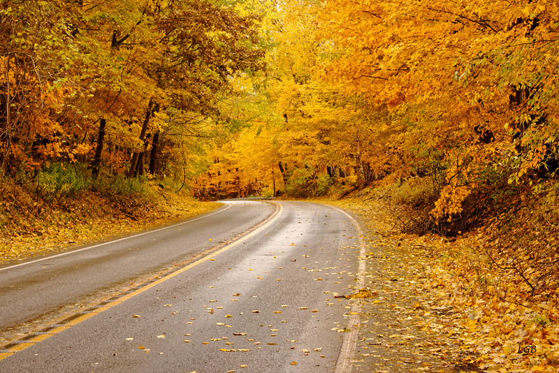 Fall road near Erie, PA.