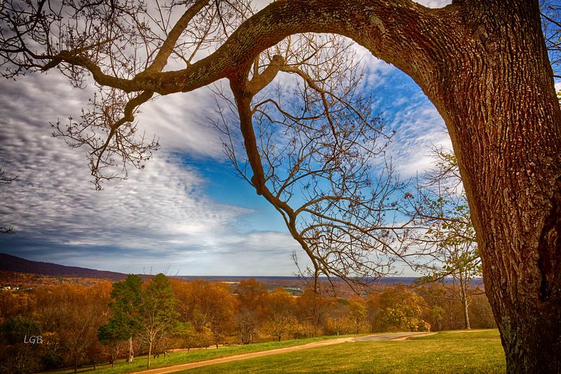 Tree at Monticello, VA