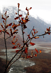 Denali Park in Fall