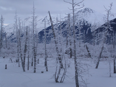 Winter - Potter, AK