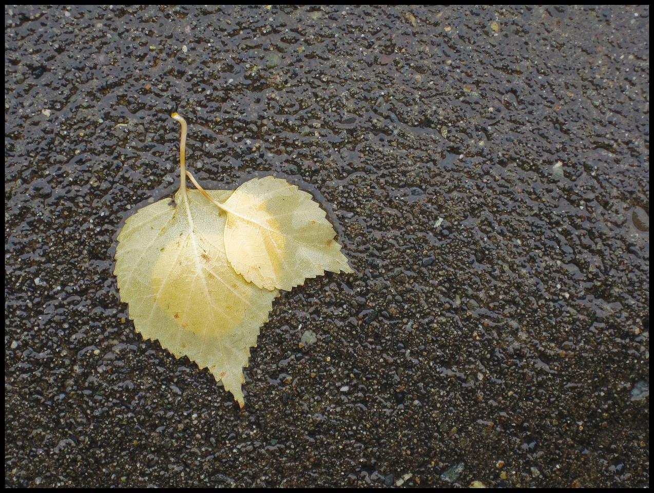 Fall Leaf on Pavement
