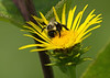 The pollinator (not the Decider)