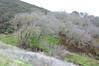 Fall scene at desert olive buckeye grove.