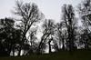 Blue oak grove, looking south from Fern Trail.
