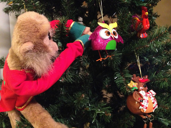 There's a monkey who wants my Christmas ornaments.