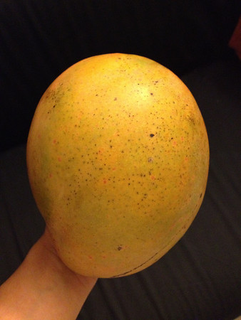 This mango is bigger than my hand.