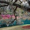 Mepkin Abbey Gardens I