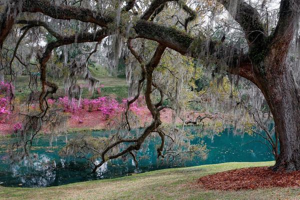 A Photo Safari Through Central South Carolina