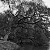 Mepkin Abbey Gardens II