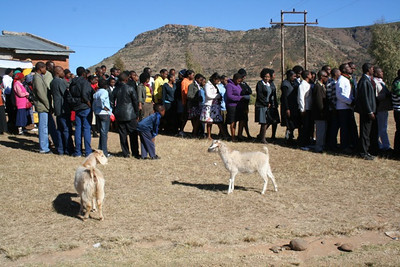 A few goats from a nearby herd look like they want to join in the procession.