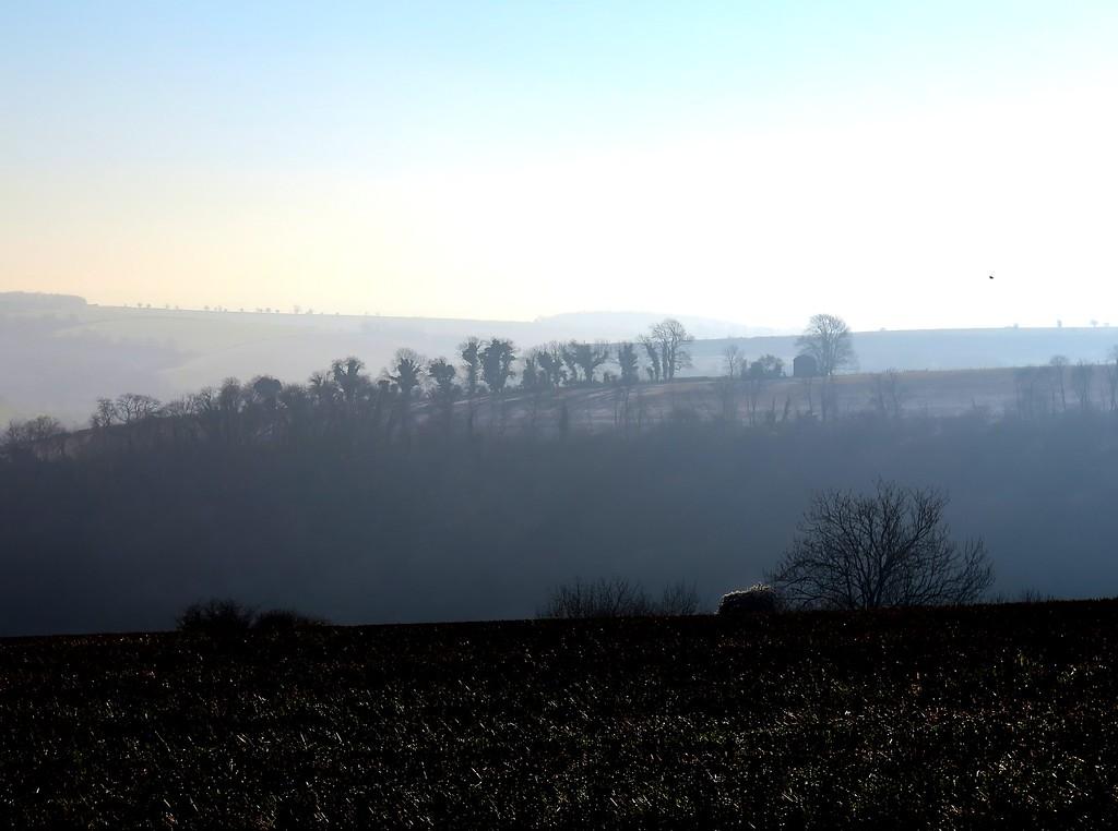 Sleletal winter trees dot the landscape