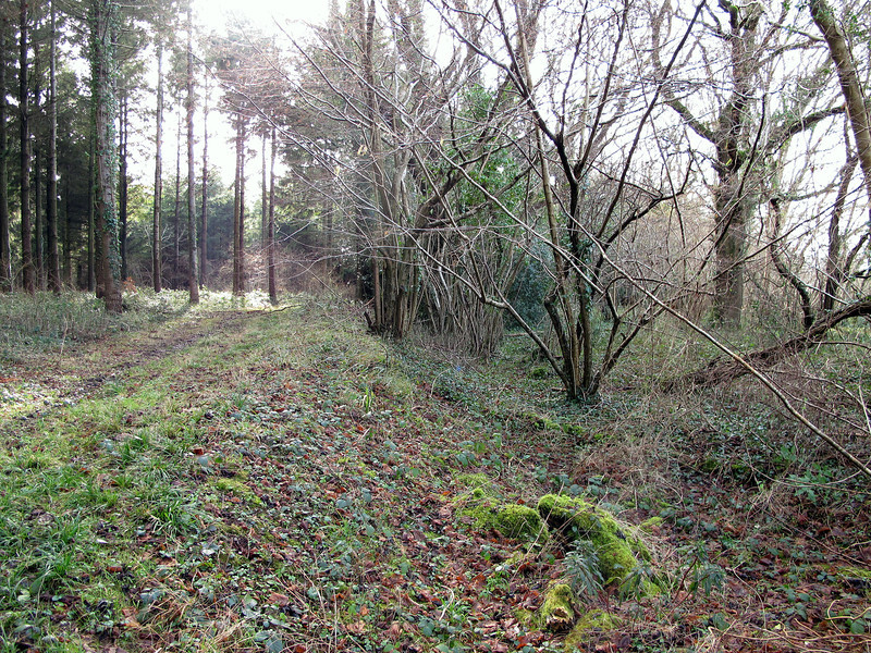 What looks like a length of Roman Road in Hogstock Coppice.