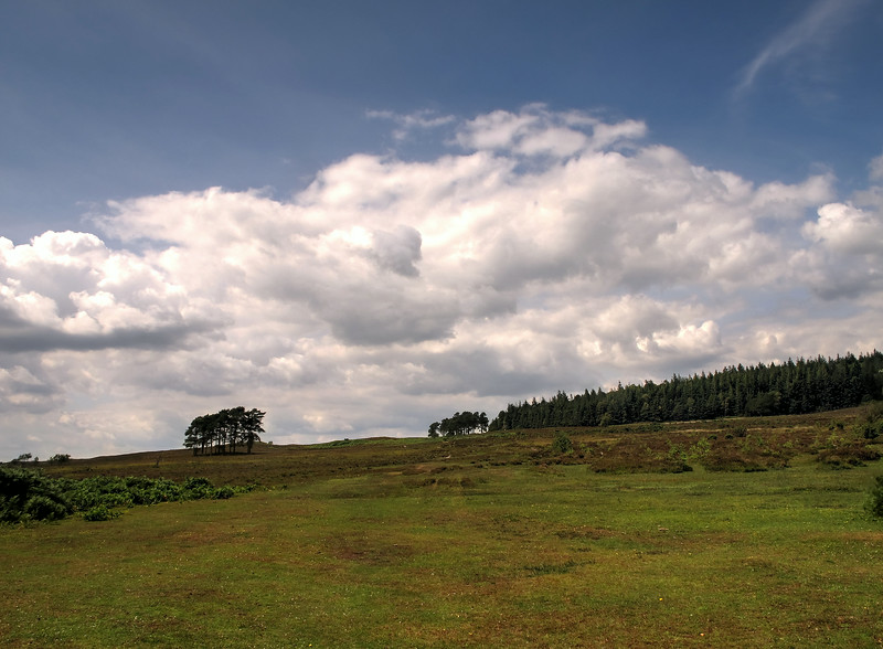 The view up from Woodford Bottom showing the Eastern end of Hasley Inclosure.